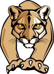 LTS mountain lion